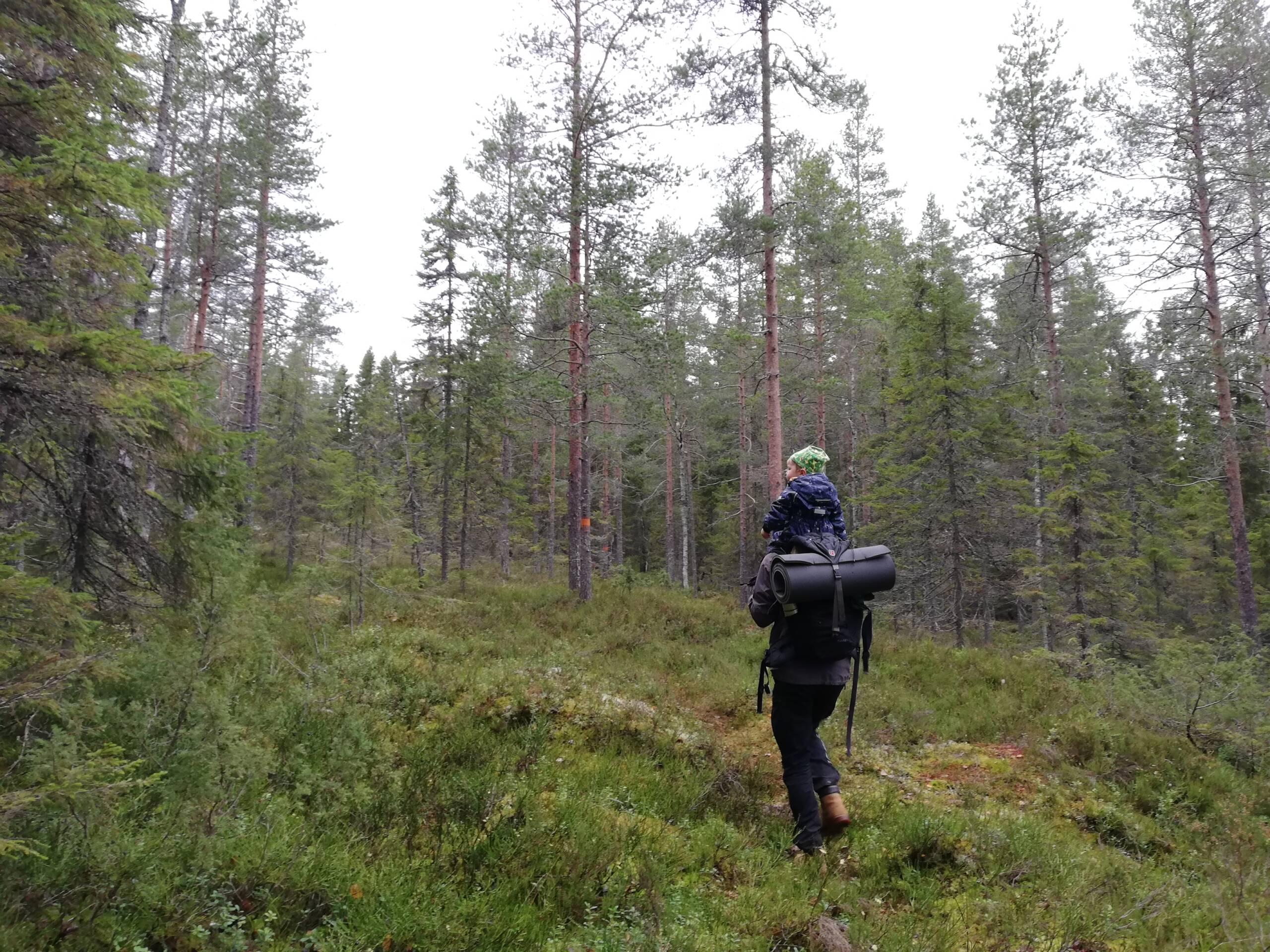 Vuxen med barn på axlarna går i skogen